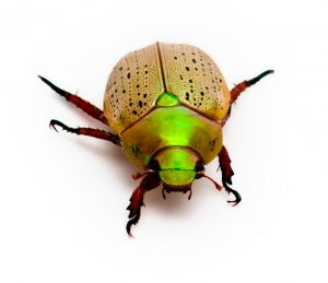 Do I Bug You?